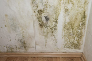 Louisville Mold Inspection corner 2